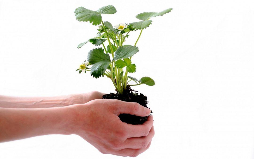 Samenaankoop groente- en kruidenplantjes