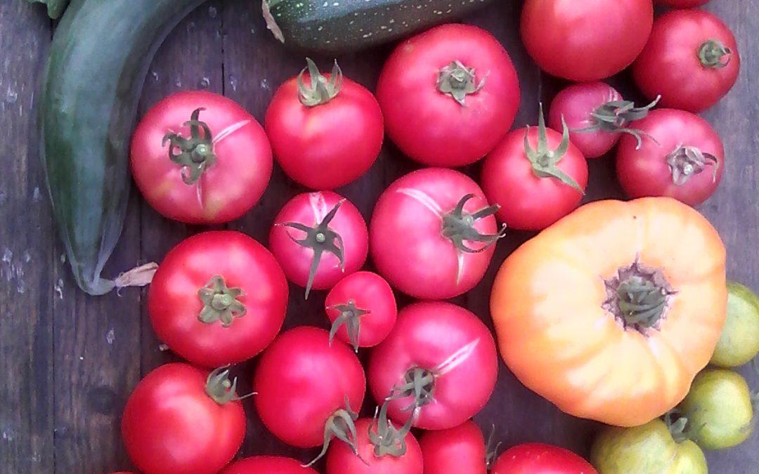 Groepsaankoop groenteplantjes II