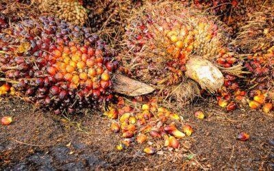 We moeten het hebben over… Palmolie